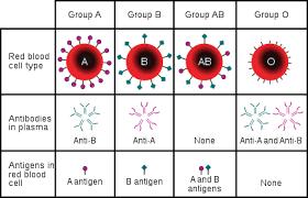 Blood Type Wikipedia