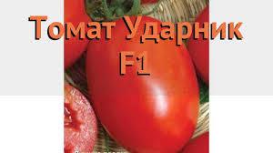 как сажать, <b>семена томата Ударник F1</b>