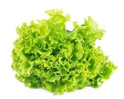 Выращивание <b>салата листового</b>, качанного, ромэна: рассадой и ...