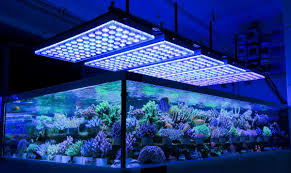 Fish Tank Lights Cheap 7 Best 36 Inch Led Lights For 30 50 Gallon Fish Tank Aquarium