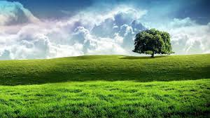 green grass field animated. Wallpaper : Sunlight, Trees, Landscape, Hill, Nature, Sky, Field, Artwork, Green, Morning, Horizon, Plateau, Cloud, Tree, Grassland, Plant, Pasture, Meadow, Green Grass Field Animated I