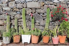 cactus gardens 16 diy create a cactus garden
