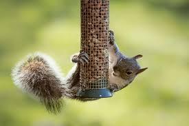 7 effective ways to keep squirrels off your bird feeders 2019