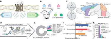 Gpcr Signaling In Vivo Brain Gpcr Signaling Elucidated By Phosphoproteomics