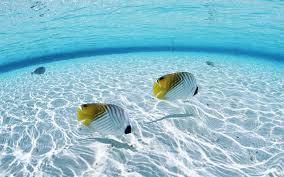 fish in the ocean wallpapers hd