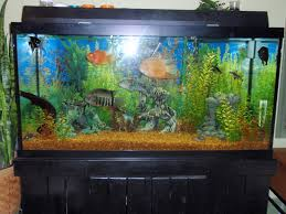 90 gallon fish tank - Google Search