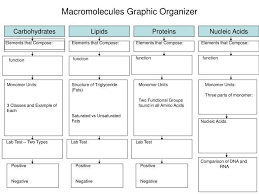 Biological Macromolecules Chart Macromolecules Graphic Organizer Biology Lessons Science