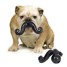 moustache for your bulldog humunga stache chew toy