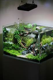 Planted Tank Coisia Vallem by Lauris Karpovs - Aquascape Awards . ... Pin by