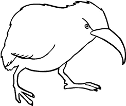 Small Picture Little Spotted Kiwi Bird Coloring Pages Little Spotted Kiwi Bird