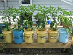 menards 5 gallon bucket. Plain Gallon Innovative 5 Gallon Bucket Vegetable Garden 17 Best Images About  Regarding Gardening To Menards L