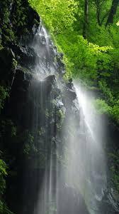 Iphone Rainforest Iphone Green Nature ...