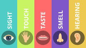 the five senses five senses song my five senses 5 senses five senses for kids