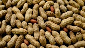 Peanut allergy treatment succeeds in study - Los Angeles Times