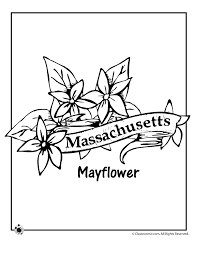 Small Picture Massachusetts State Flower Coloring Page Woo Jr Kids Activities