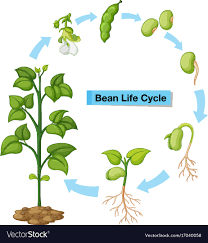 Diagram Showing Bean Life Cycle