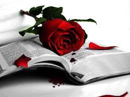 red rose cute