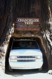 driving through chandelier tree leggett california