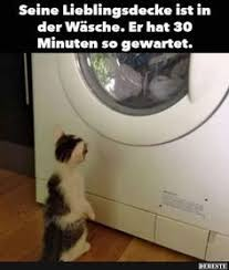 Die 169 Besten Bilder Von Katzen Mit Spruch In 2019 Lustige Bilder