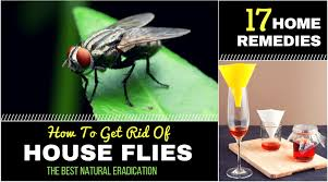Home Reme s to rid of House Flies