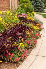 10 garden filler plants proven winners