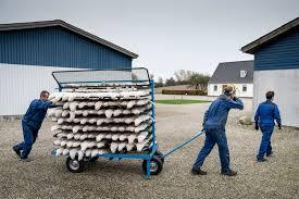 Aug 29, 2021 · kostenfreie corona testungen in dänemark. Danemark Kontroverse Um Nerz Totungen Bpb