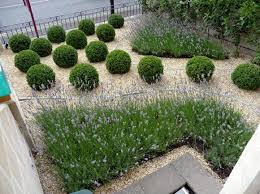 Garden Design Ideas For Small Spaces Lavender And Box Balls In A Interesting Gravel Garden Design