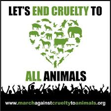 best end animal cruelty images animal rights a voice for animals essay contest open to student 19 younger deadline