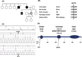 A Family Pedigree Chart Black Symbols Indicate Clinically
