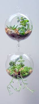 Terrarium Glass Hanging Double Hook with Succulents Vertical Gardening DIY  Kit via Etsy. Love this