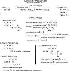 Реферат Жиры ru Освободившиеся жирные кислоты анализируют методом газожидкостной хроматографии остальные соединения с помощью тонкослойной или бумажной хроматографии