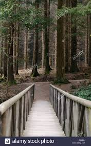 Wooden Bridge Game Wooden bridge leading to a dark forest of larch trees as featured 95