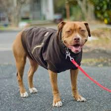 recycle your old hoo into this fabulous dog coat