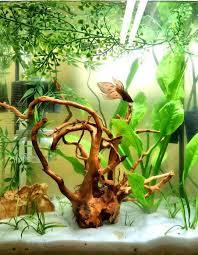 small screenshot 1 office fish. modren fish betta than a bowl betta fish aquariums u0026 tank inspiration inside small screenshot 1 office fish e