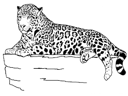 Small Picture Coloring Download Leopard Print Coloring Pages Leopard Coloring