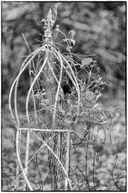 garden obelisk trellis. I\u0027m Attracted To Objects Like This. Although It\u0027s Probably Not All That Old It Gives The Impression Of Having Been There Forever. Garden Obelisk Trellis