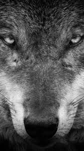 10 white wolf apple iphone 5 640 1136 wallpapers mobile abyss