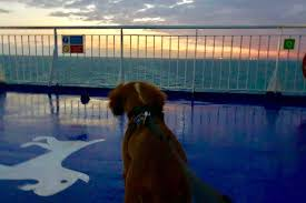 Image result for dog on ferry
