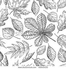 leaf drawing. seamless vector pattern with autumn leaves. hand drawn detailed botanical background. oak, maple leaf drawing 6