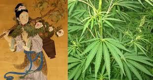 weed and hemp