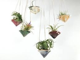 hanging air plant holder air plant hanging planter hanging glass air plant holders hanging air plant holder