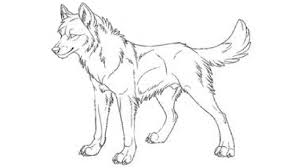 wolf drawing. Modren Drawing HOW TO DRAW AN AMAZING ANIMAL JAM WOLF And Wolf Drawing S