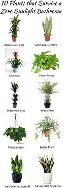 20 Low Light Indoor Plants That Are Easy To Grow  Low Light Indoor Fruit Trees Low Light