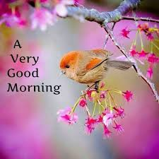 Good Morning Best Images 24 Best Good Morning Images On Pinterest Good Morning Bonjour 8