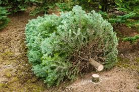 """Résultat de recherche d'images pour """"tree"""""""