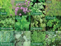choose from a variety of diffe herbs