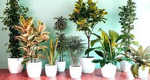 indoor plants for low light indoor plants low light good indoor plants low light best indoor