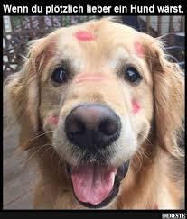 Wenn Du Plötzlich Lieber Ein Hund Wärst Lustige Bilder Sprüche