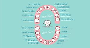 Children S Tooth Chart Letters Baby Teething Chart What Order Do They Come In Mama Natural