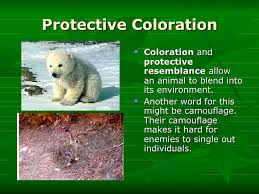 Image result for animal camouflage word